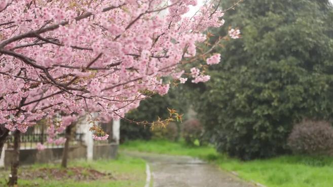 今日惊蛰!春日惊醒,万物惊喜!