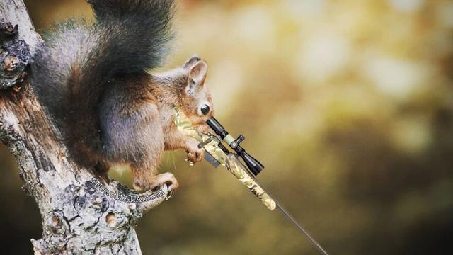 当松鼠骑摩托车、投篮、射击时会是什么样的呢?