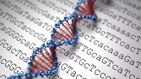 价格便宜的基因检测 你会选择做吗?