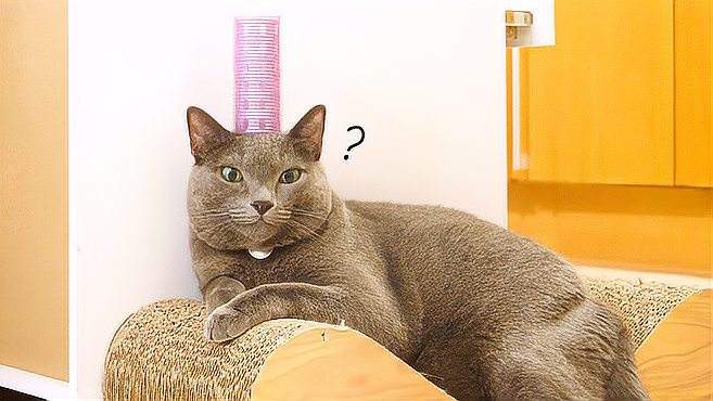 测试在猫主子身上放东西?喵:我不是真的人,但你们是真的狗啊
