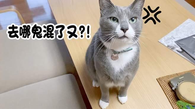 因为回家晚了而被猫咪们训了一顿的铲屎官 这小表情全写在脸上了!