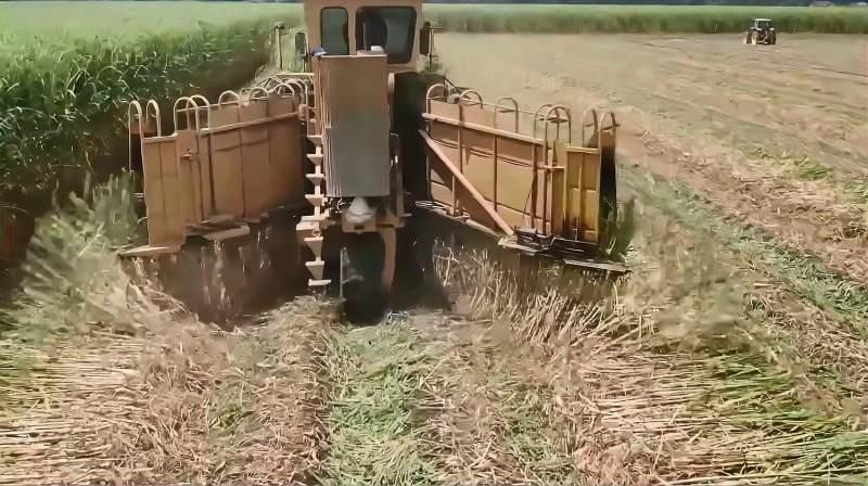 看了国外大型甘蔗收割机械,才知道什么叫先进,真是大开眼界