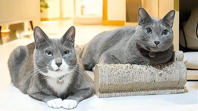 小猫咪也有眼睫毛?最后出场的一位是笑点呀