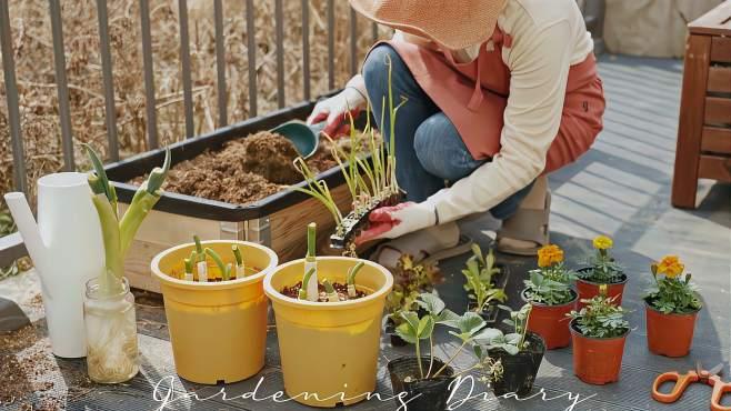 家庭主妇的庭院规划整理技巧,营造满满幸福感!