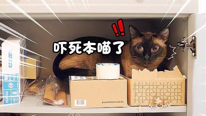 喜欢躲猫猫的小猫咪! 被发现的样子实在是萌到爆炸 !