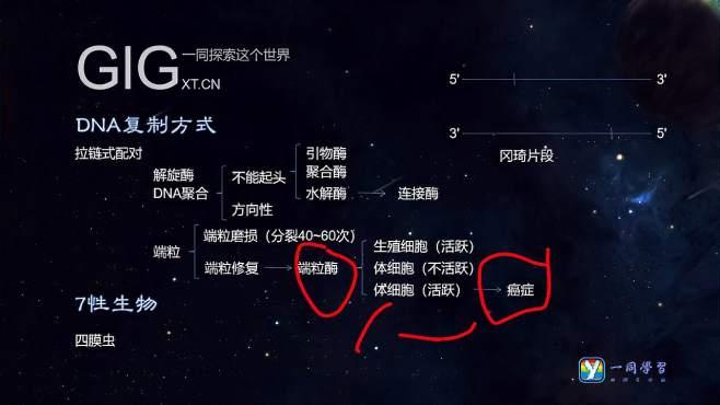 039.遗传信息之DNA与RNA详解,师承李永乐