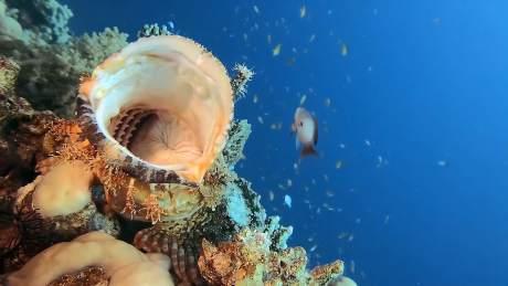 15种神秘的海洋鱼类,你可能根本没想到它们真的存在