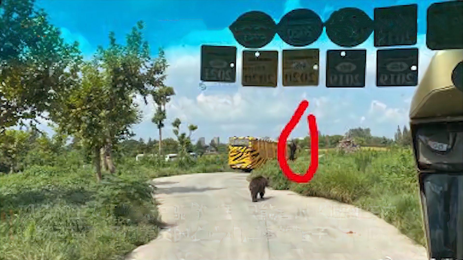 上海野生动物园员工遭熊撕咬致死,网友目击:人被熊群拖走只剩鞋