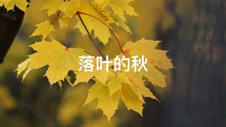 又是一年秋叶黄,听云菲菲《落叶的秋》,找寻您曾经的美好与忧伤