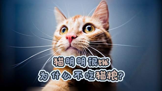 猫明明很饿为什么不吃猫粮