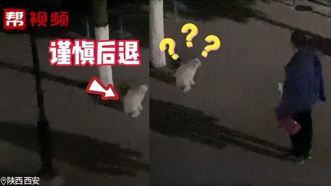 高校大爷训话扰民猫咪:你每天在这里学习,要做一只有礼貌的猫