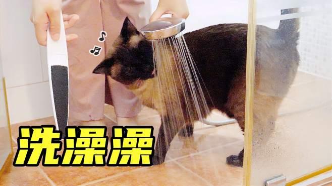 居然有喜欢水的猫!洗澡刷牙一次搞定
