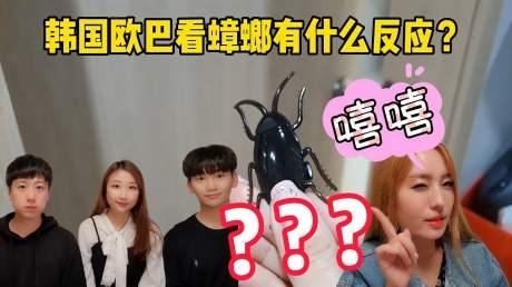 韩国欧巴竟然害怕蟑螂?胆子这么小吗?