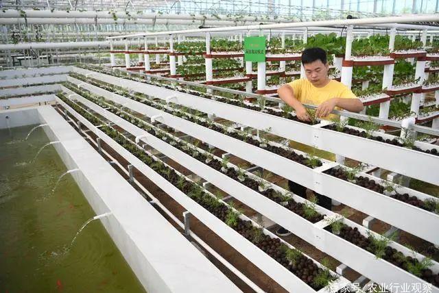 我国加大型养殖场建设的金融支持;国家支持民营企业参与乡村振兴