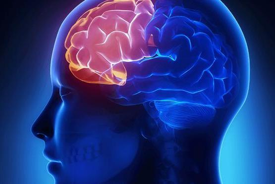 怎么为孩子打造聪明大脑?7岁前大脑不同的发展主题,父母要知道