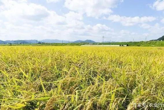 我国农作物自主品种超95%;中国农业富豪集中在养殖和饲料领域