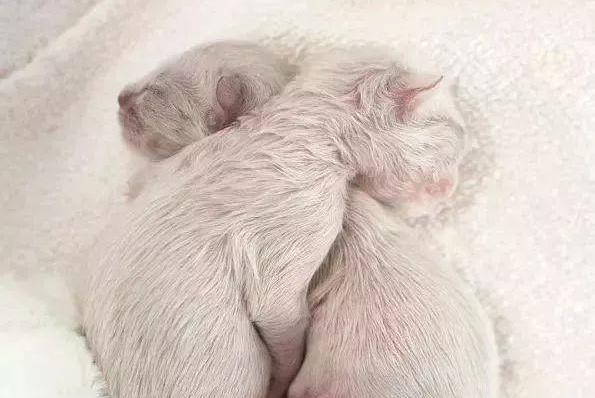 好心人收养一只畸形流浪猫,悉心照料后,简直是捡到了宝贝