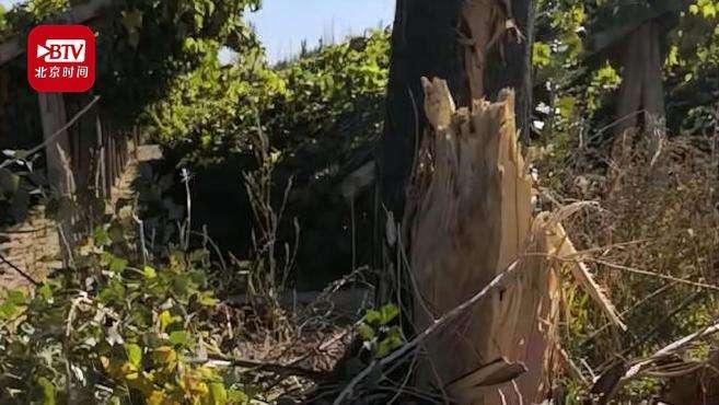 甘肃成立调查组调查敦煌防护林被毁