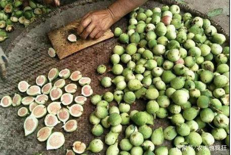 农村1种奇怪野果,长得酷似秤砣,没有果肉都是籽,做凉粉8元1碗