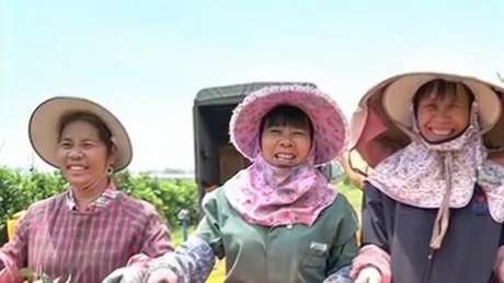 南宁六县区县域经济发展成绩突出荣获自治区表彰