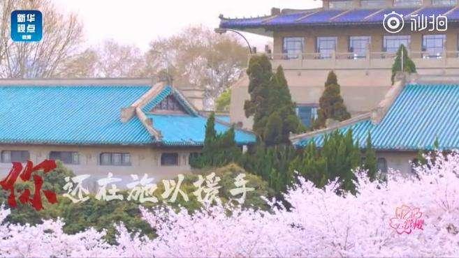 春暖花开樱为有你 让我们把春天搬到你面前