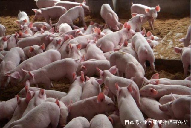 允许在耕地上建养殖场,无需办理环评审批!国家大力扶持养猪!
