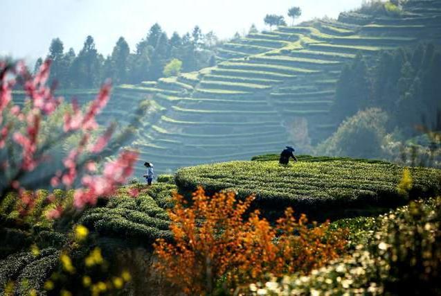 """来自""""中国名茶之乡"""",古朴而美丽的福建小城,大自然的馈赠"""