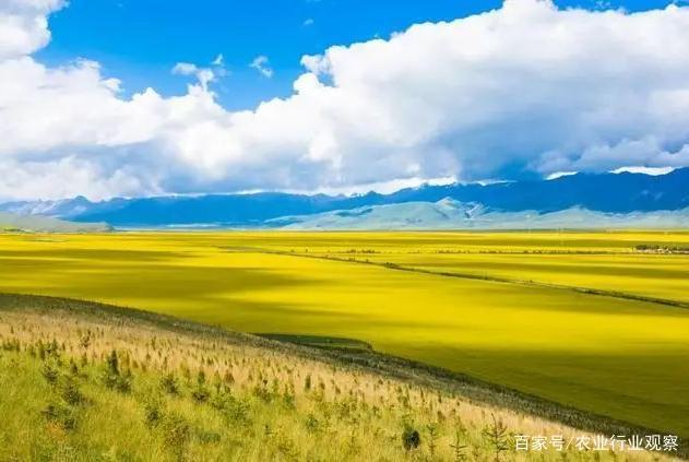 政策:我国加大支持畜牧业绿色发展;2025年中国或将出现粮食缺口