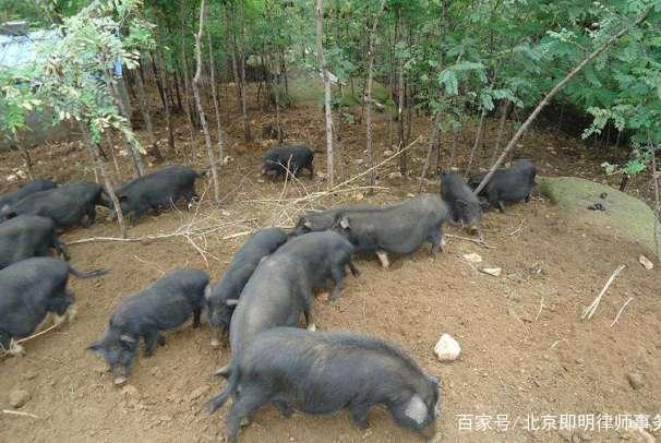 建在荒山上的养殖场被强拆,养殖户心血归零!