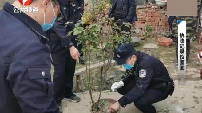 太和一女子种植13颗罂粟被行政处罚,理由让民警万万没想到