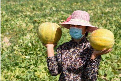 新疆才有的水果,个大如西瓜,没牙的人也能吃,1斤8元正上市