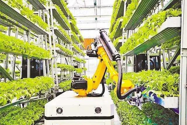 中国粮食可保14亿人口吃饭问题;美国人:控制食物就控制全人类