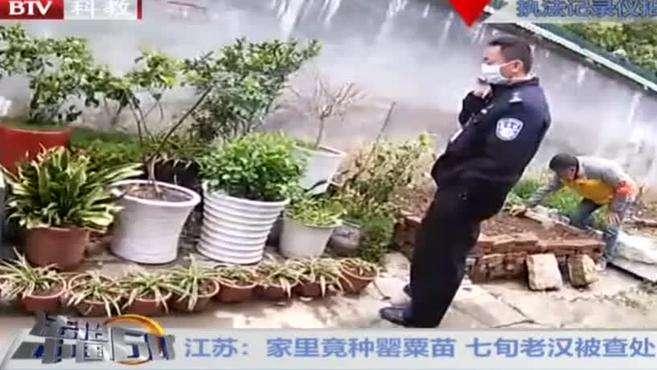 江苏:家里竟种罂粟苗 七旬老汉被查处