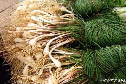 南方一种稀罕菜,像蒜不是蒜,过去大量种植,如今常年出口日本
